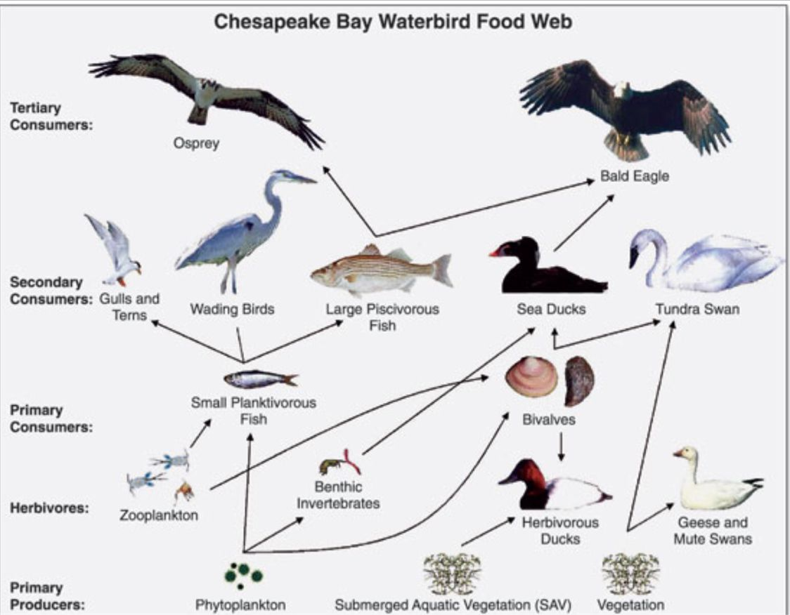 An Interactive Food Web Game For The Classroom