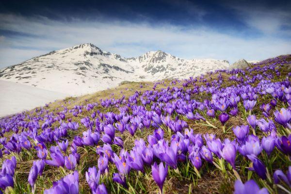 landscaping ideas flower