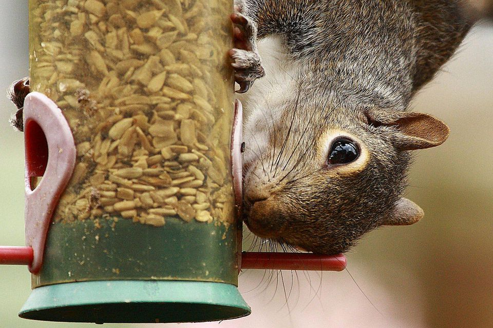 Easy Tips for a SquirrelProof Bird Feeder
