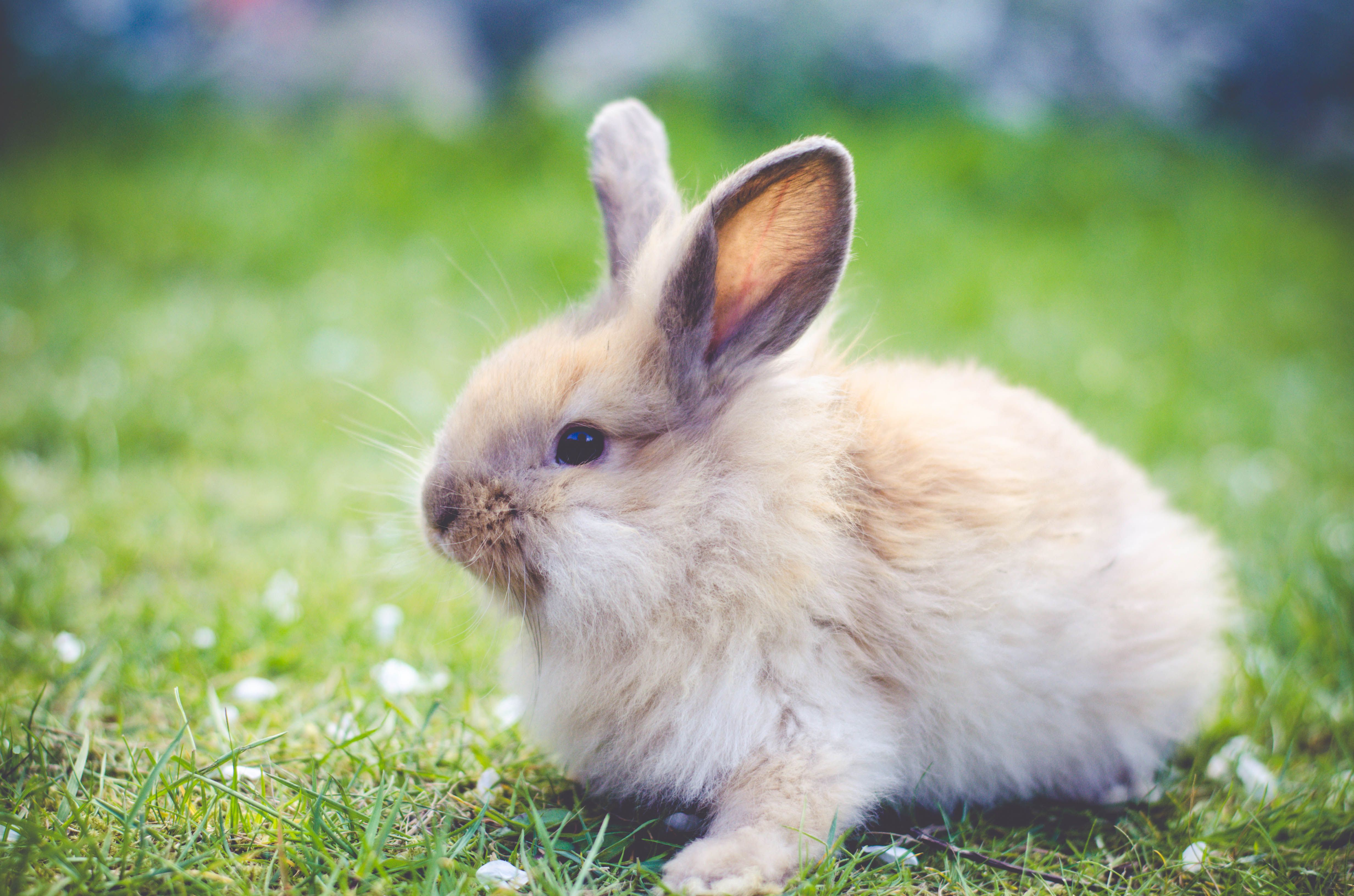 How To Prevent And Treat Rabbit Ileus Gi Stasis