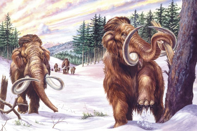 A herd of Woolly Mammoths