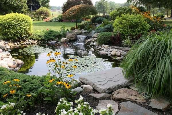9 great plants small backyard