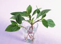 The Best Way to Store Basil and Keep It Fresh