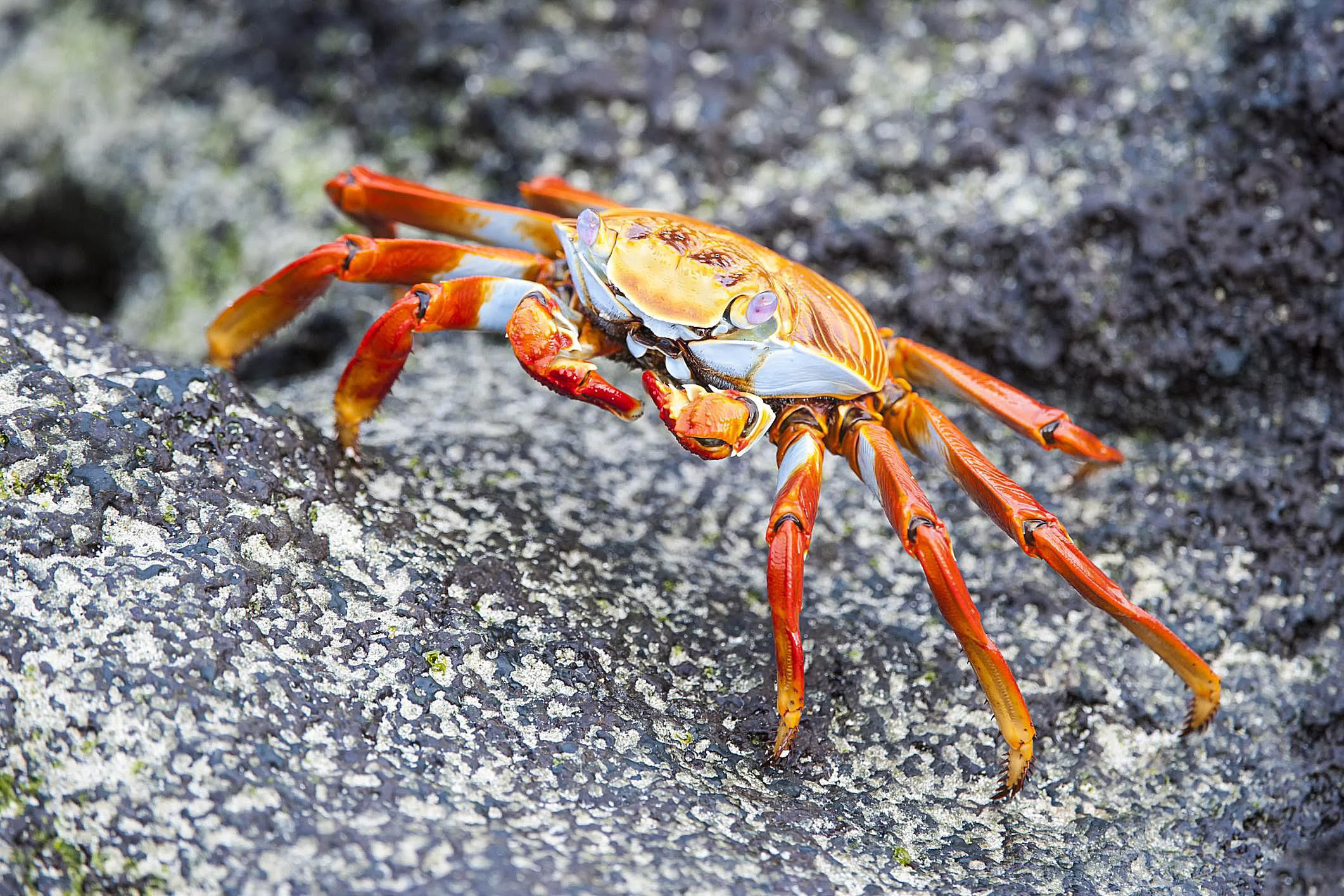 What Is A Crustacean