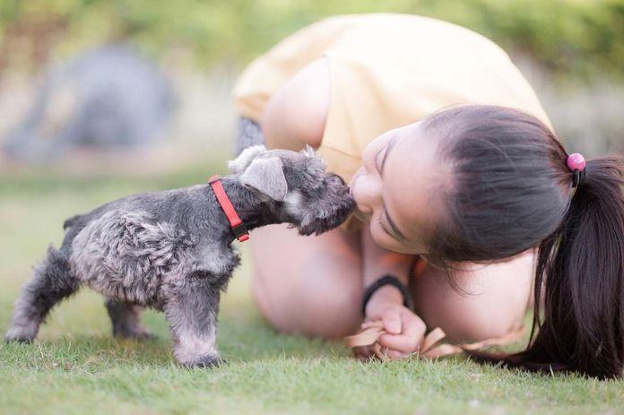 Dog Giving a kiss