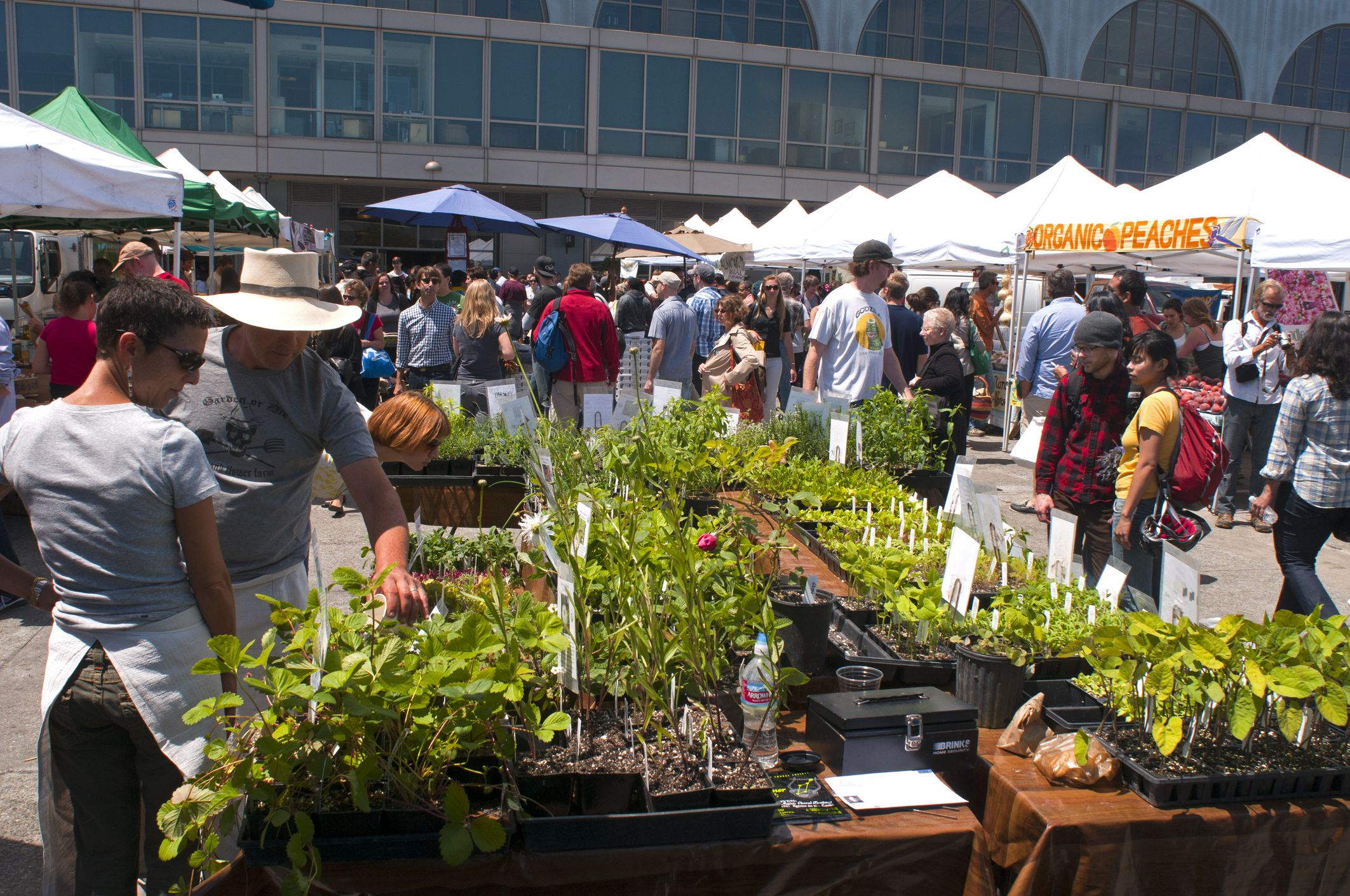 10 Crucial Tips For Shopping At Farmers Markets