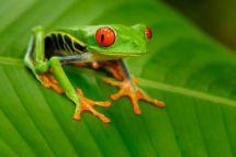 10 Fast Facts About Amphibians