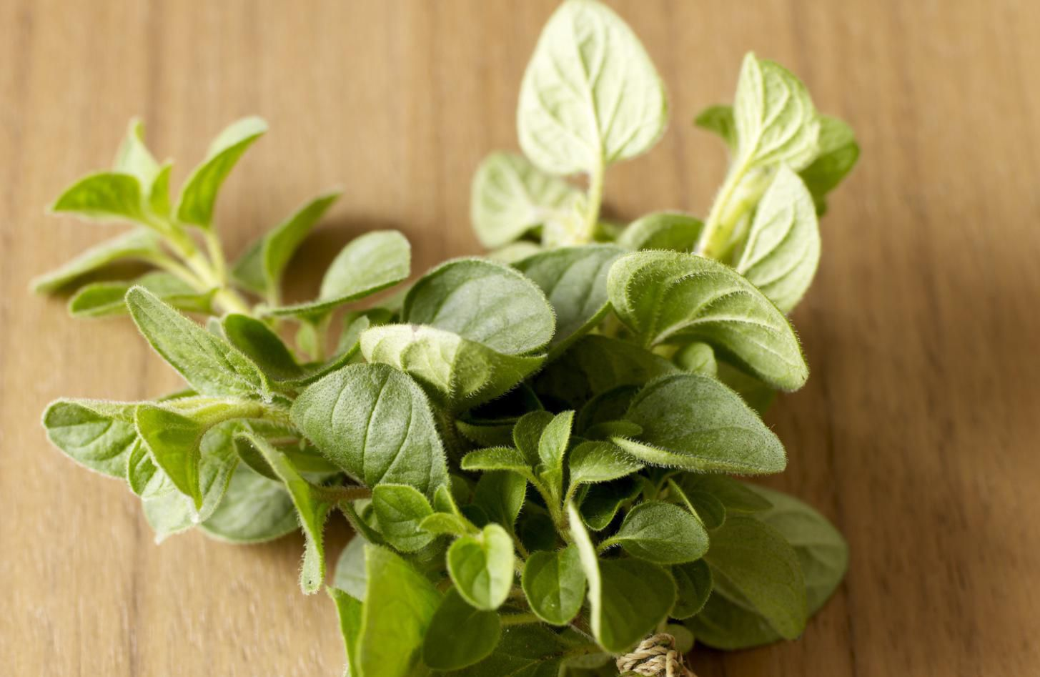 How to Grow and Care for Oregano Plants