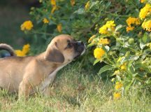 Dog Repellents: How to Keep Dogs Away From Yards