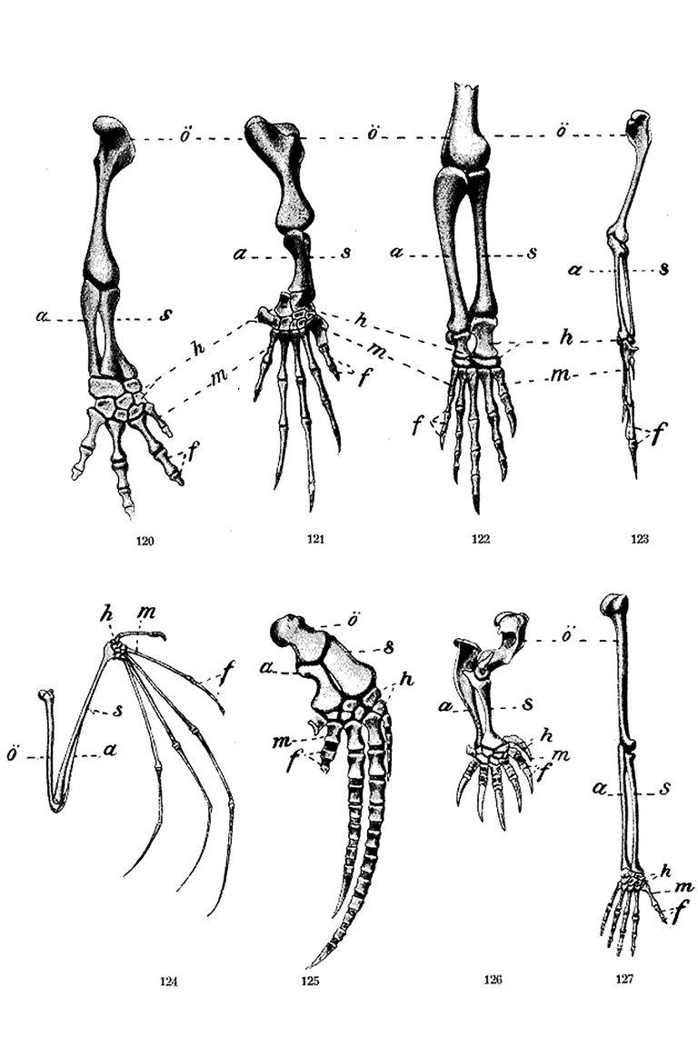 Anatomy, Evolution, and Homologous Structures