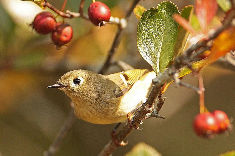 Where To Find Autumn Birds Fall Birding
