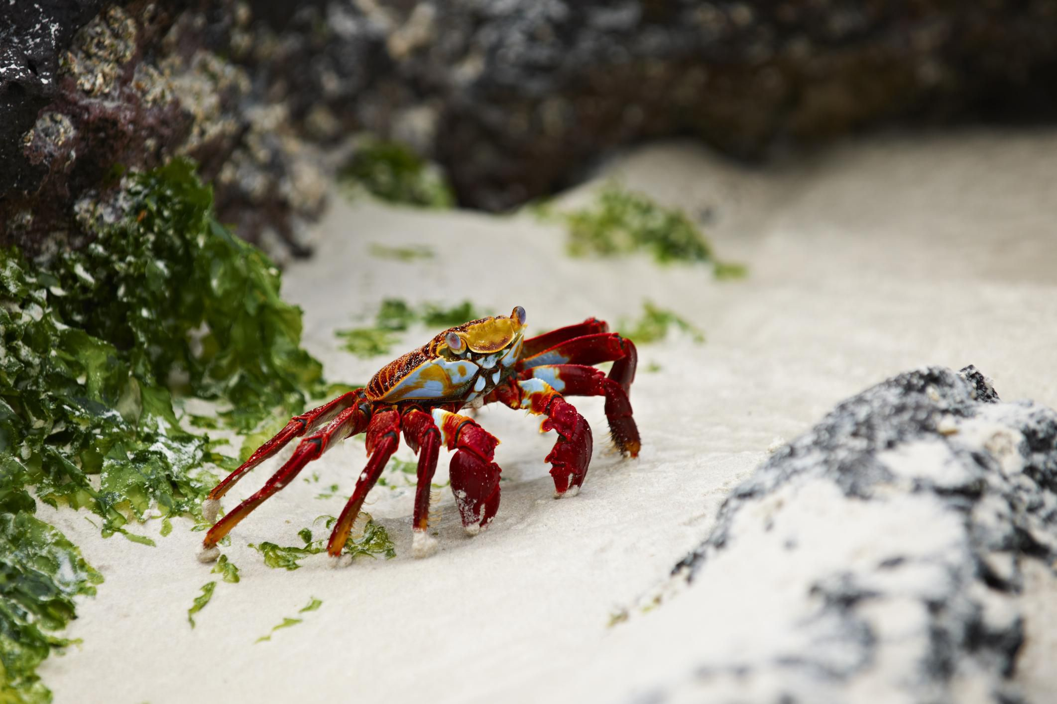 Crustacean Characteristics And Other Basic Facts