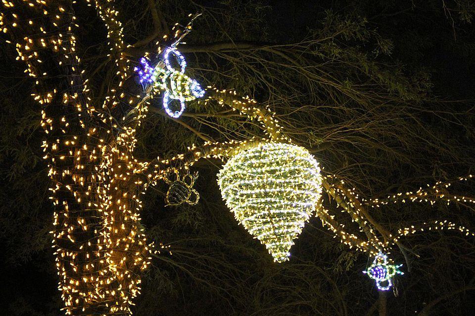 Zoo Lights Phoenix Hours