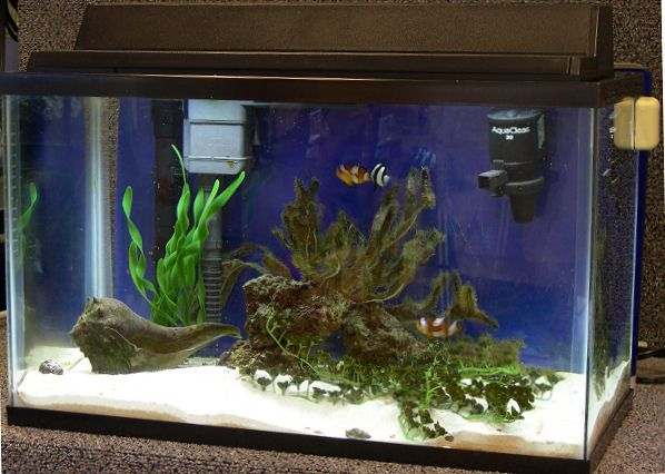how much does an outdoor kitchen cost flooring tiles for a 10 gallon mini-reef clownfish tank?