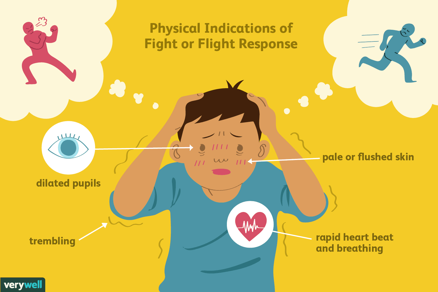 How The Fight Or Flight Response Works