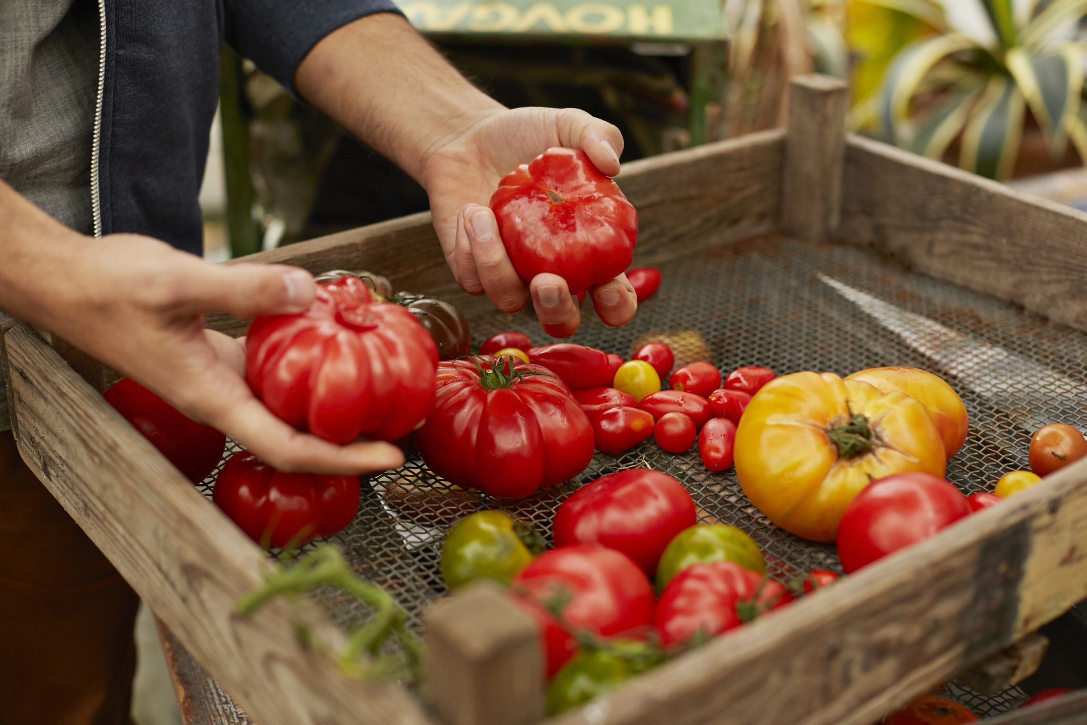 do it yourself outdoor kitchen prices everything you need to know about growing tomatoes