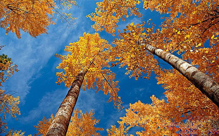 Free Widescreen Fall Wallpaper 41 Free Fall Wallpapers And Backgrounds