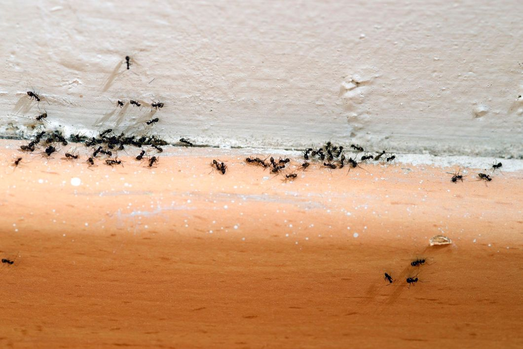 Here S How To Get Rid Of Ants It Easy If You Take The Right Steps