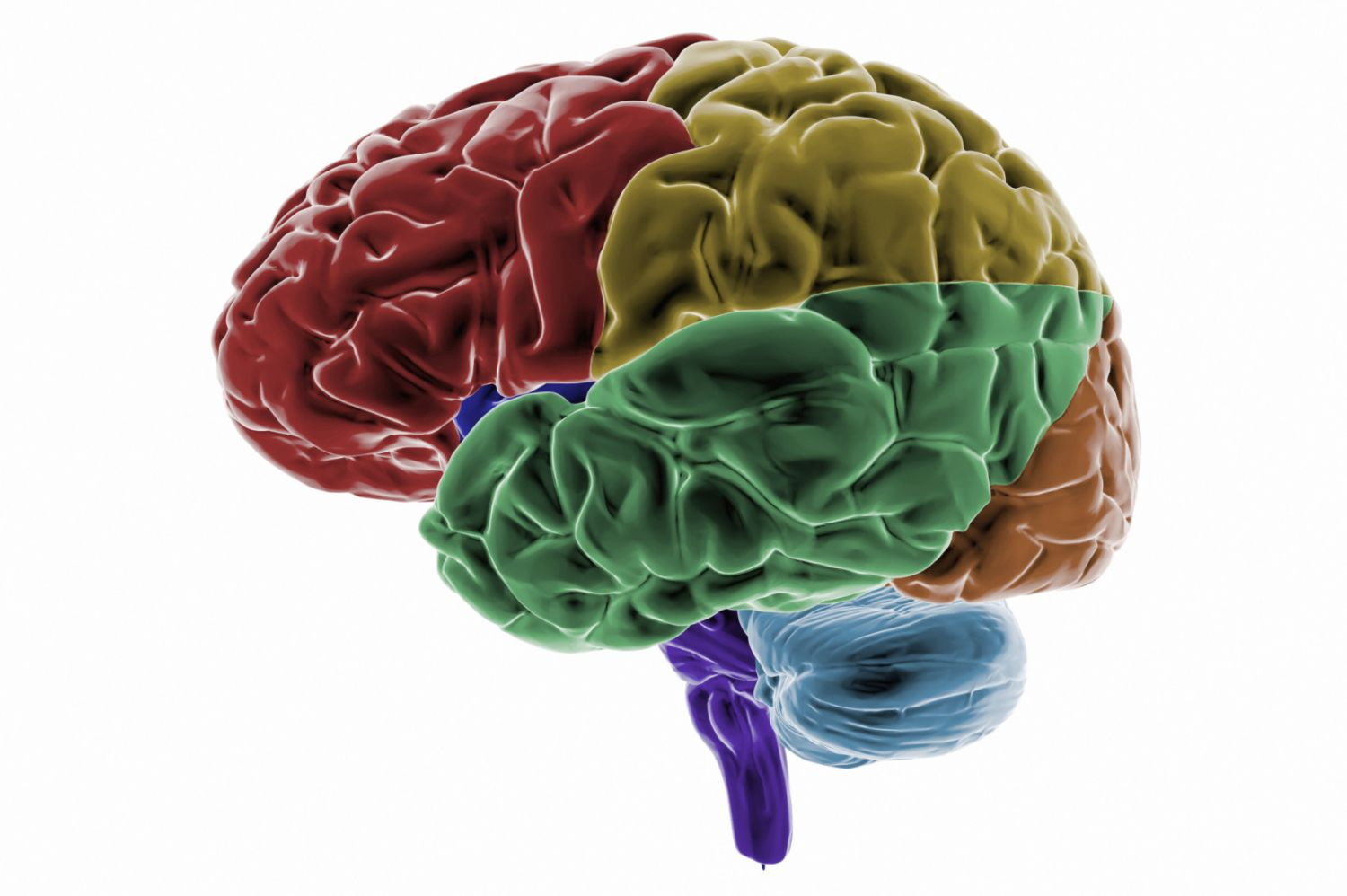Learn About Temporal Lobes In The Cerebral Cortex