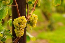 Riesling Rules - German Wine Classifications