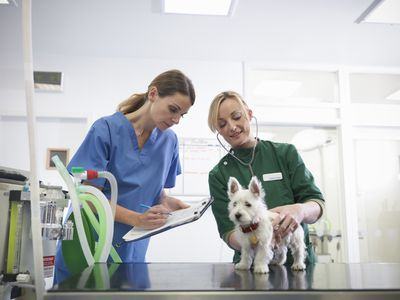Emergency and Critical Care Veterinary Technician