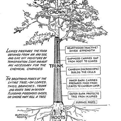 Diagram Of Pot Leaf Slide Of Leaf Wiring Diagram ~ Odicis