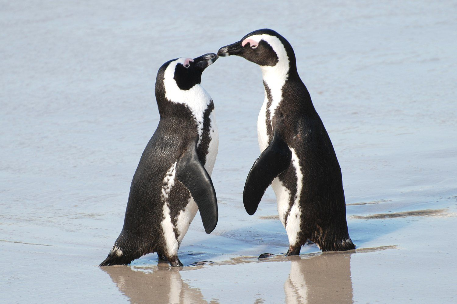 15 Fun Facts About Penguins