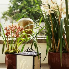 Green Kitchen Decor Tile Flooring Ideas Tips For Growing Cymbidium Orchids