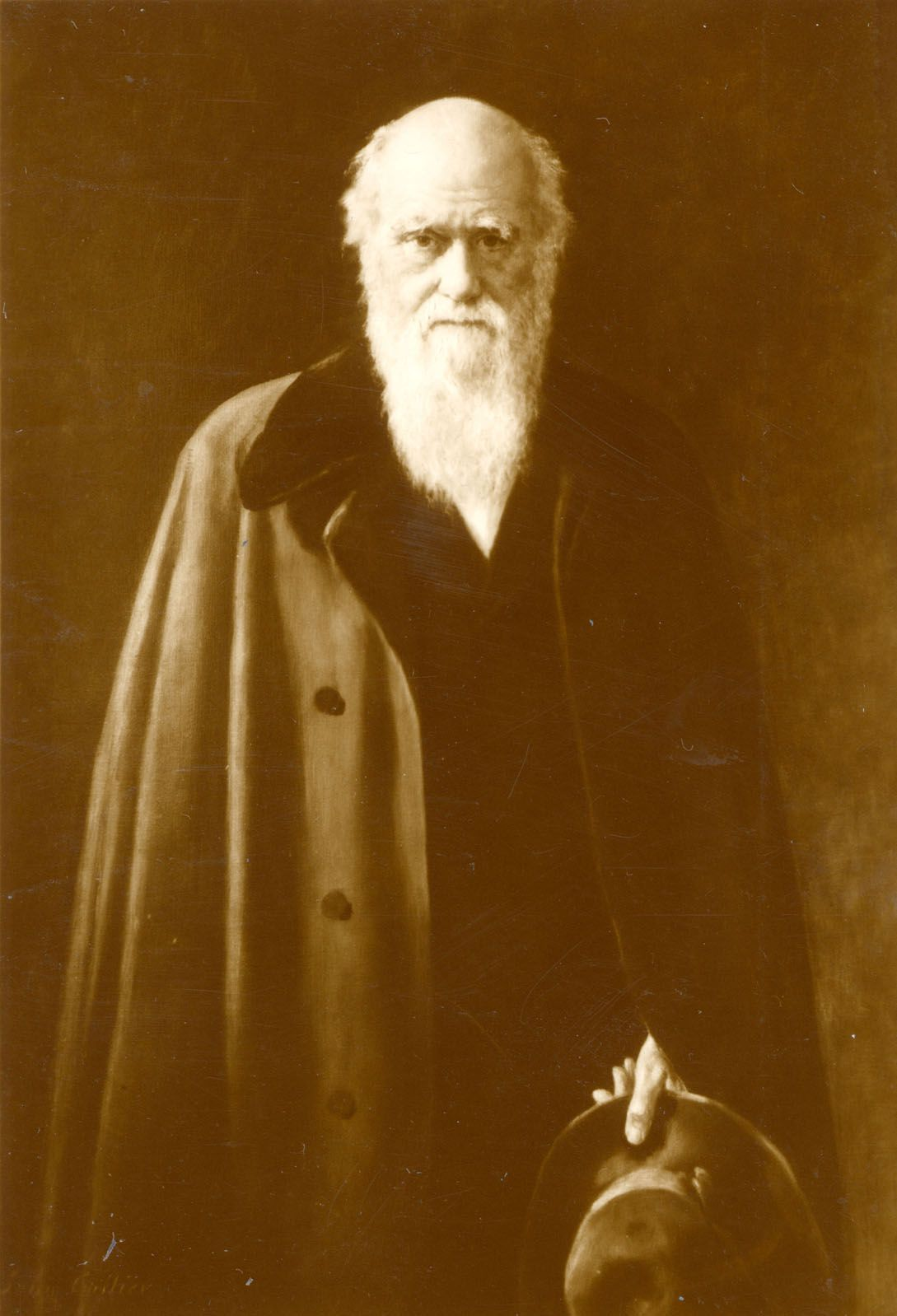 Darwin S Theory Of Evolution And Natural Selection