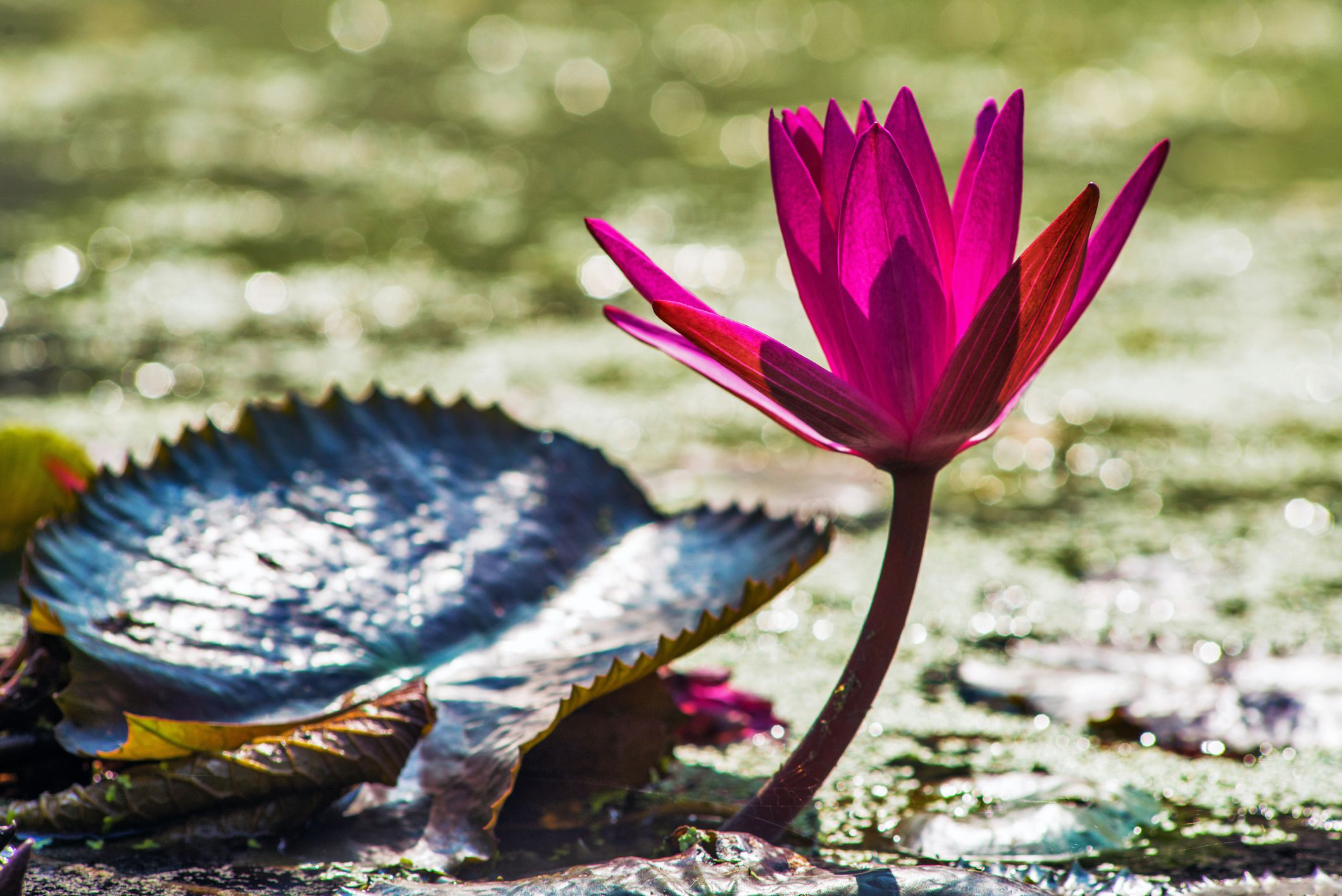 Right Effort And The Eightfold Path Of Buddhism