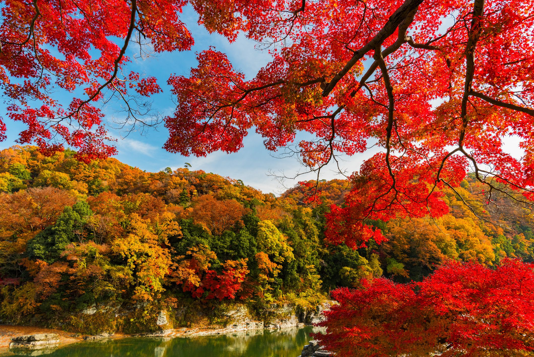 A Complete Fall Color And Autumn Leaf Viewing Guide