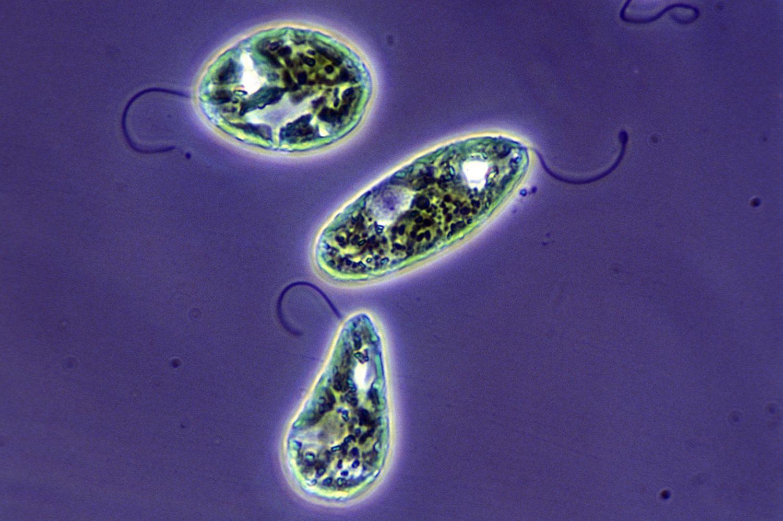 7 Major Types Of Algae