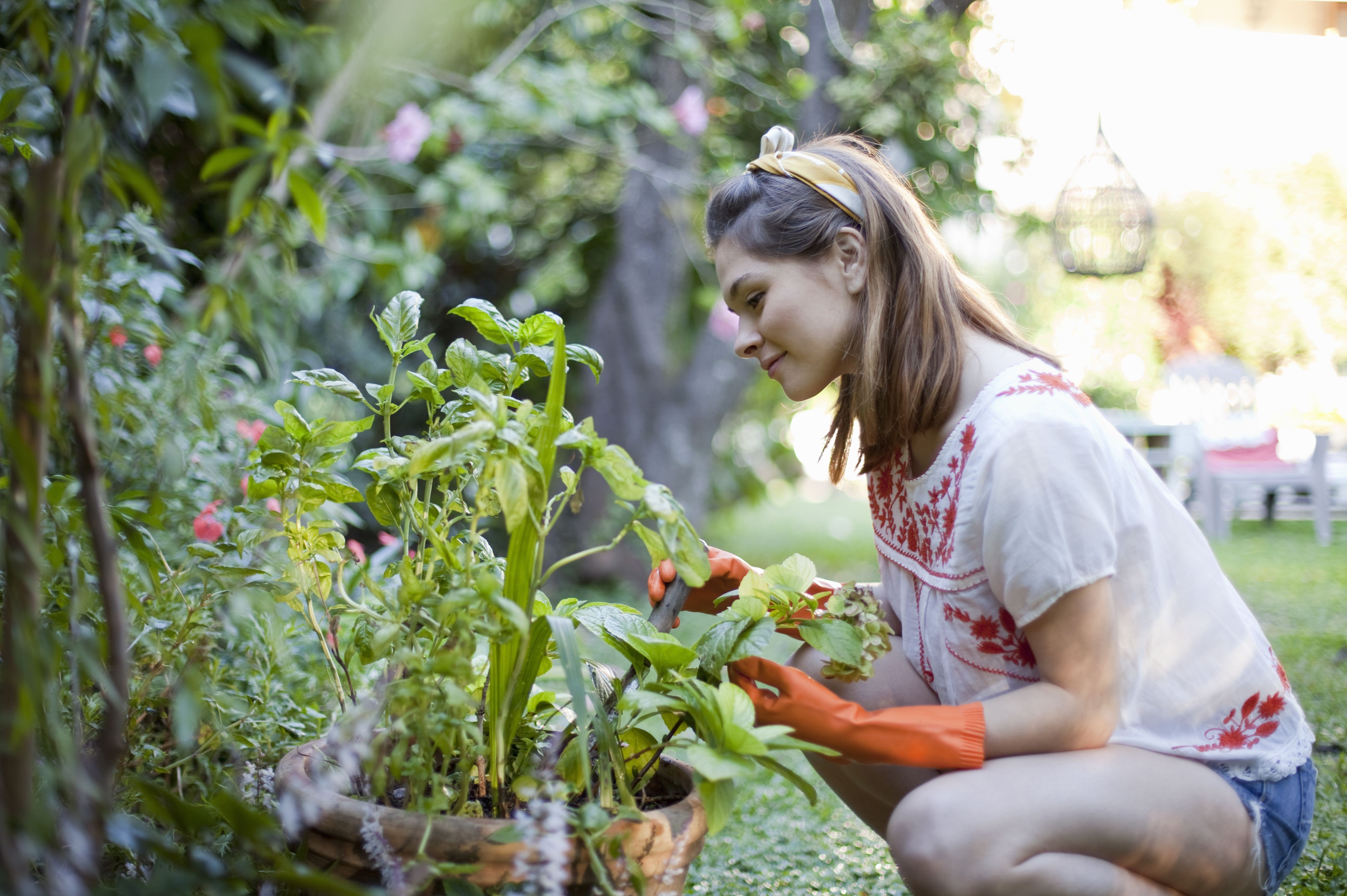 Gardening Landscaping And Groundskeeping Skills