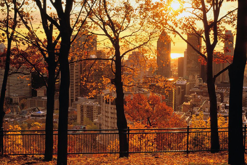 Autumn Falling Leaves Live Wallpaper 9 Montreal Fall Foliage Destinations You Have To See