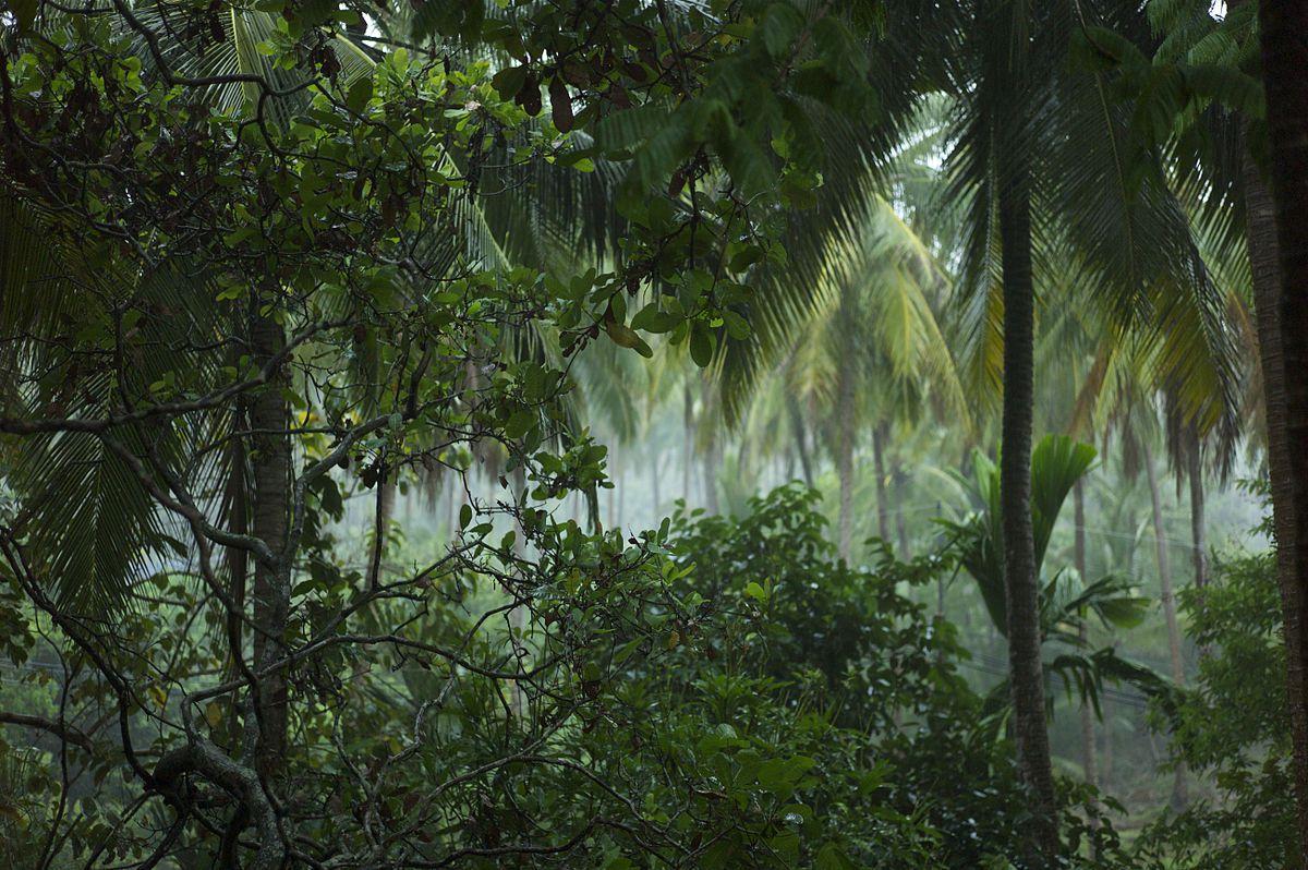 The Tropical Rainforest Biome