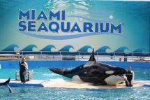 Miami Seaquarium Florida Attractions