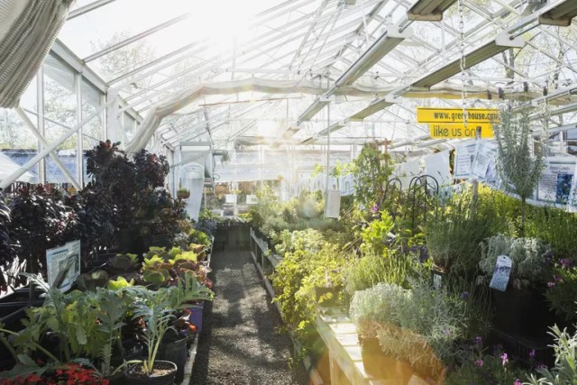 Plants and flowers in sunny greenhouse