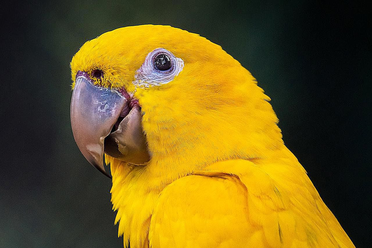 kitchen cooking games used appliances golden conures as pets - species profile