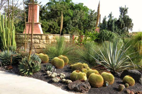 types of cactus grow