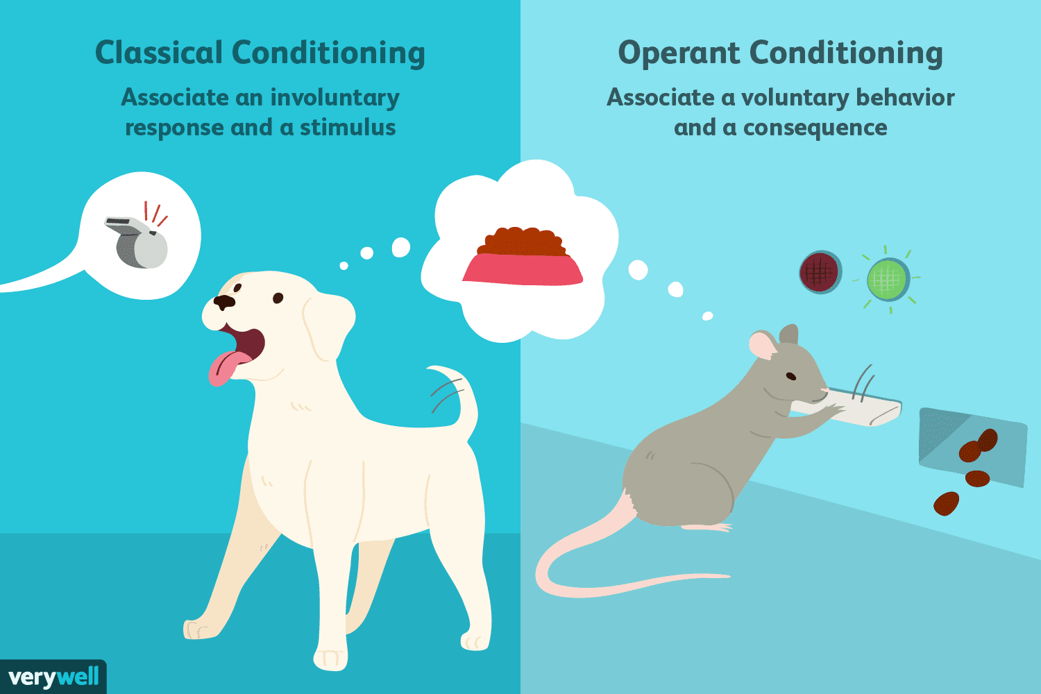 Differences Between Classical Vs Operant Conditioning