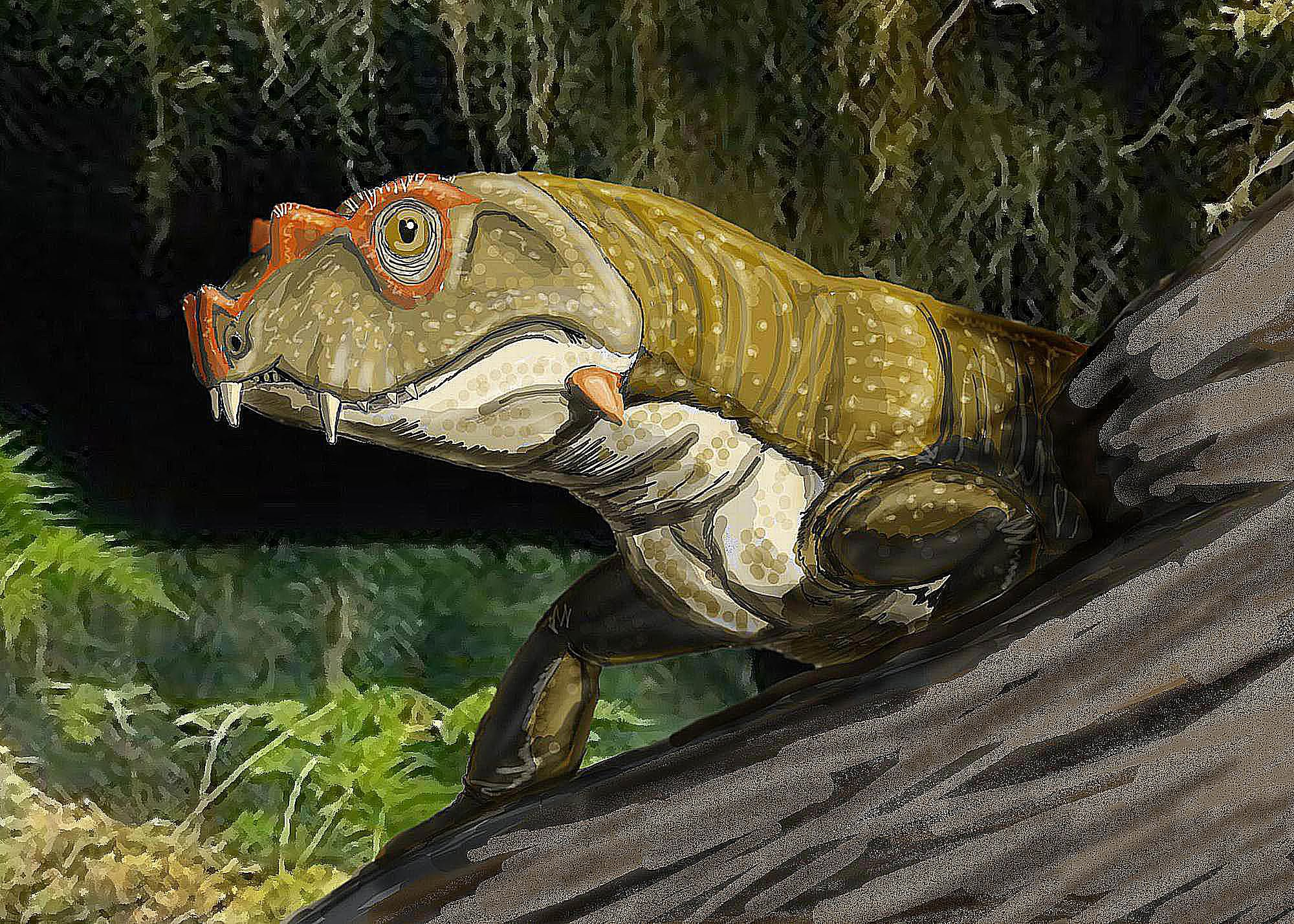The First Reptiles