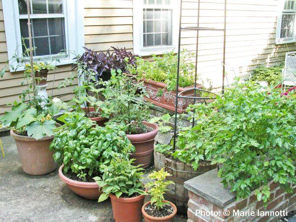 Gardening Idea Vegetable Container Garden