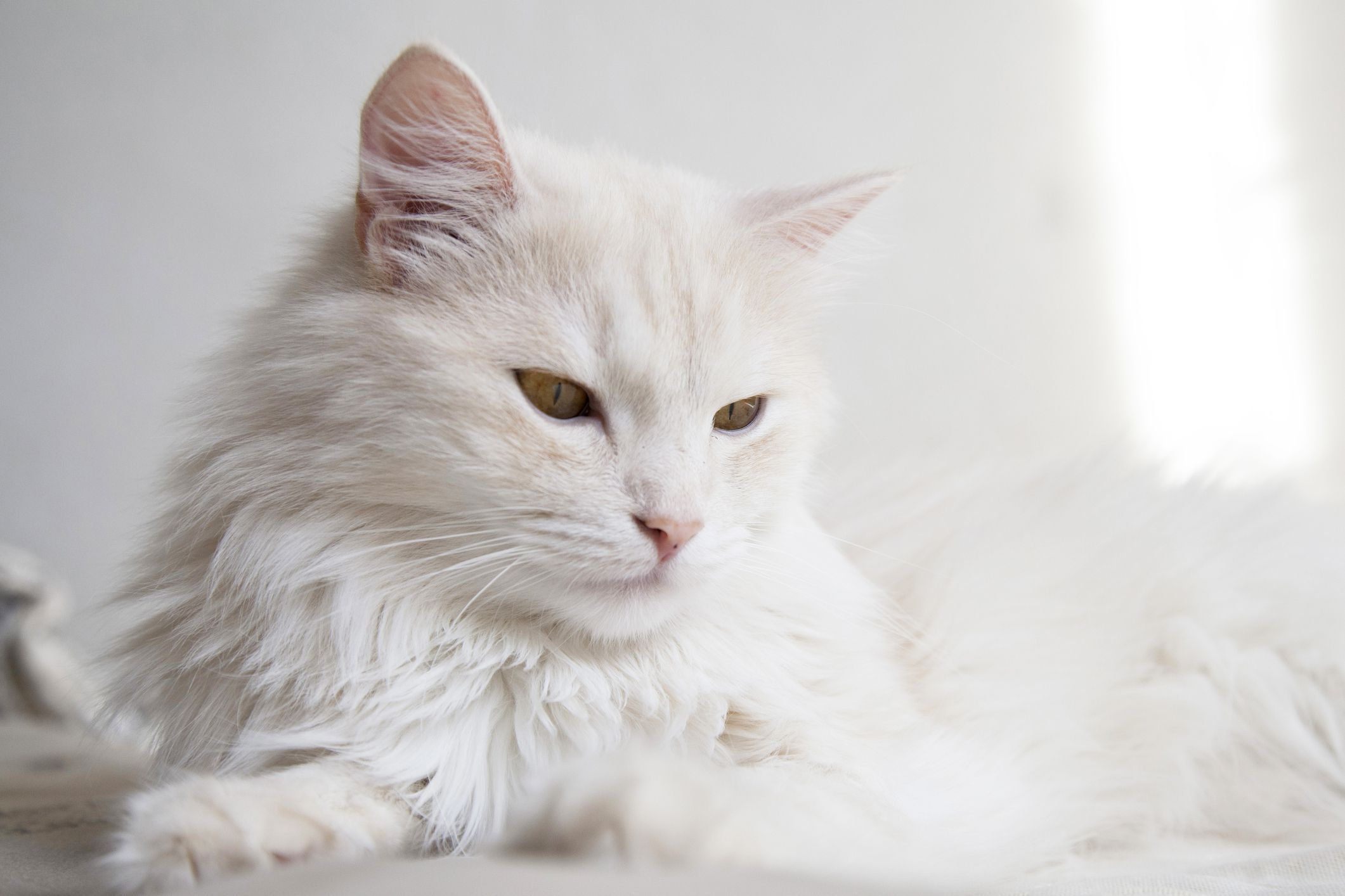 What Is The Difference Between Cat Hair And Fur