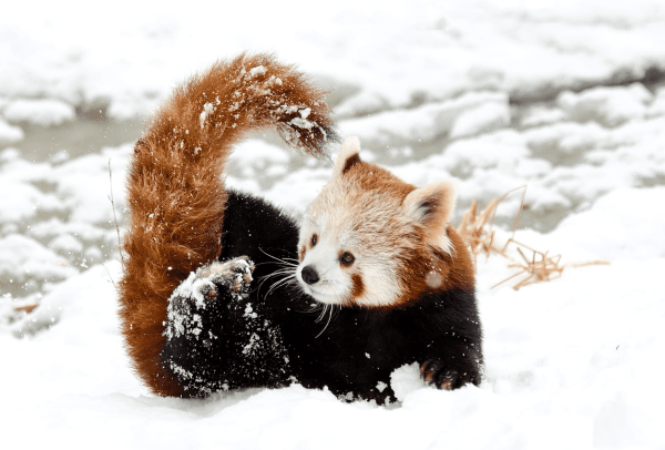 Baby Animals Excited Winter