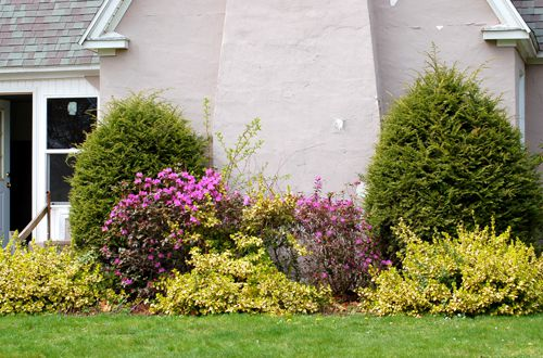 Pictures of Foundation Plantings: Ideas for Shrubbery