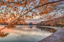 Fall Foliage Washington DC