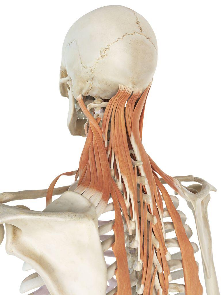 Bone Top Shoulder Pain
