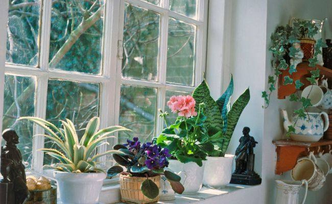 Winter Care Of Houseplants
