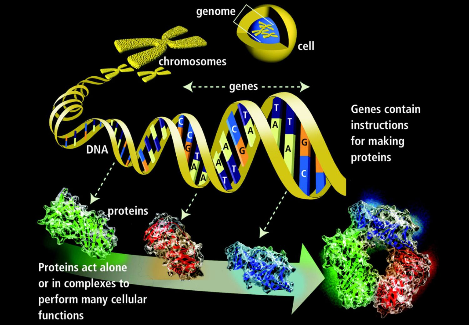 Genetics Basics Introduction To Genetics