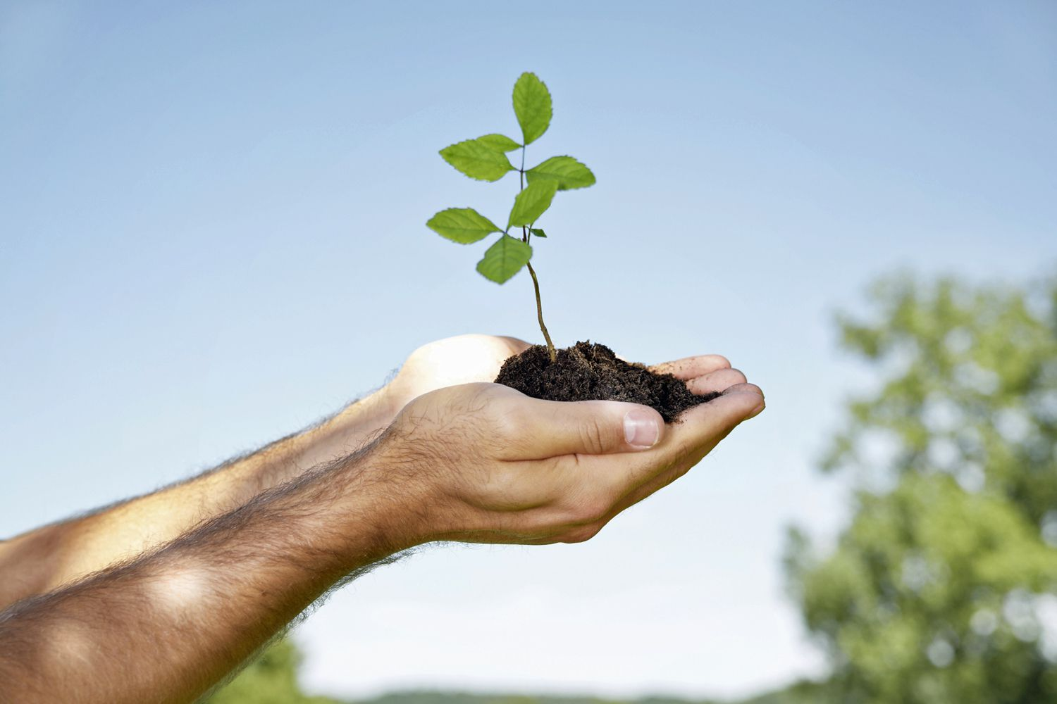 The 4 Essential Steps To Spiritual Growth